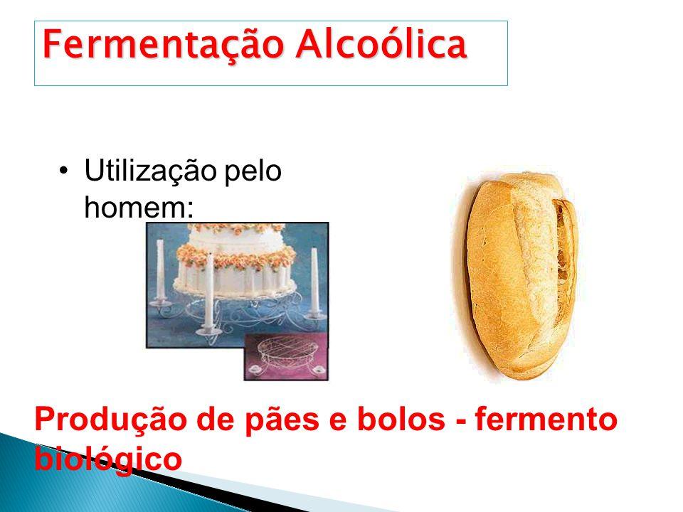 Utilização pelo homem: Produção de Bebidas alcoólicas