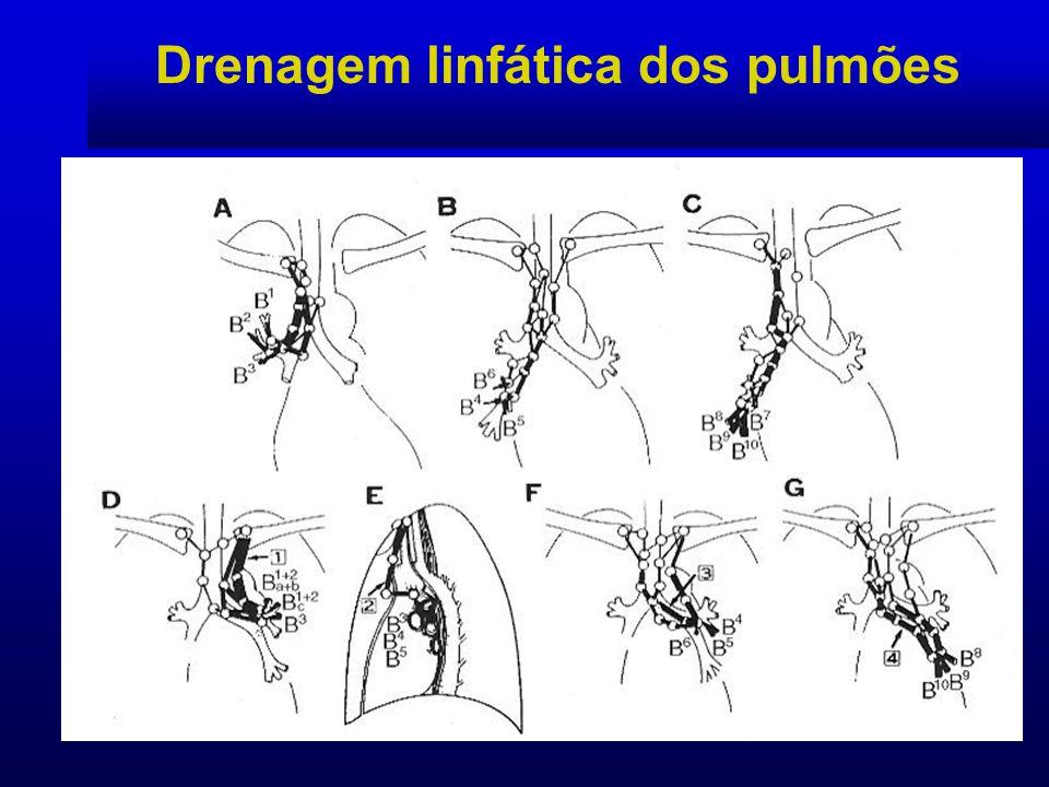 Drenagem linfática dos pulmões Estação 7