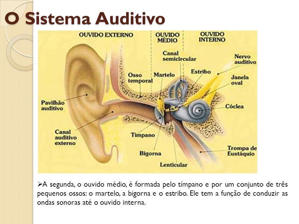 E a terceira, o ouvido interno, é formada pela cóclea e pelo nervo auditivo, cuja função é receber as ondas sonoras conduzidas pela orelha média e transformá-las em impulso nervoso enviando-as ao córtex cerebral.