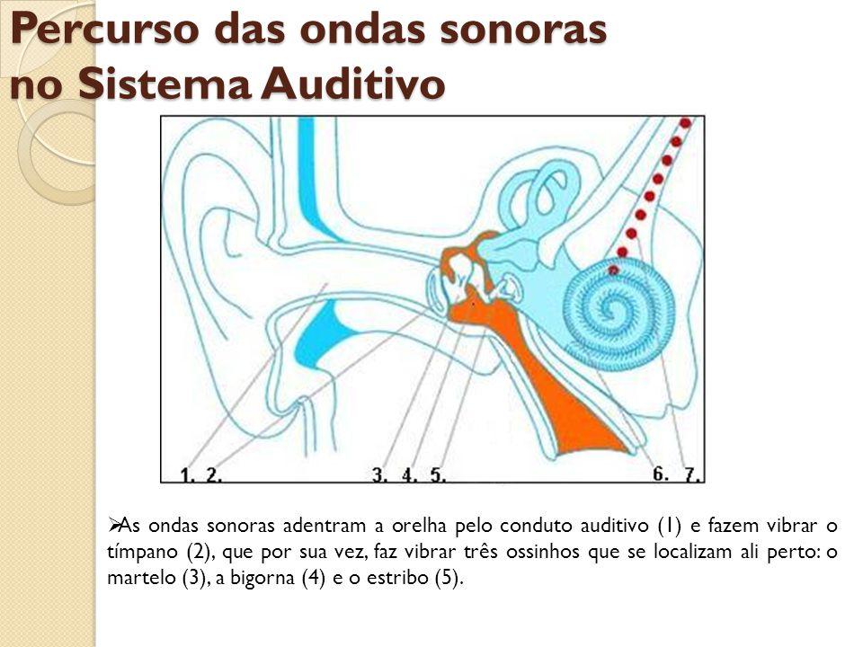 Percurso das ondas sonoras no Sistema Auditivo Este último transmite aquelas vibrações para a cóclea (6) onde, através do nervo auditivo (7), as células cocleares enviarão uma mensagem para o cérebro que reconhecerá os sons: fala, música ou barulho.
