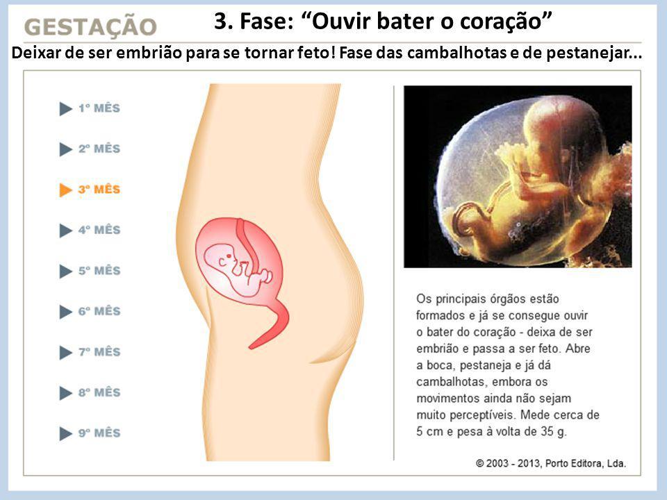 3.Fase: Ouvir bater o coração Deixar de ser embrião para se tornar feto.
