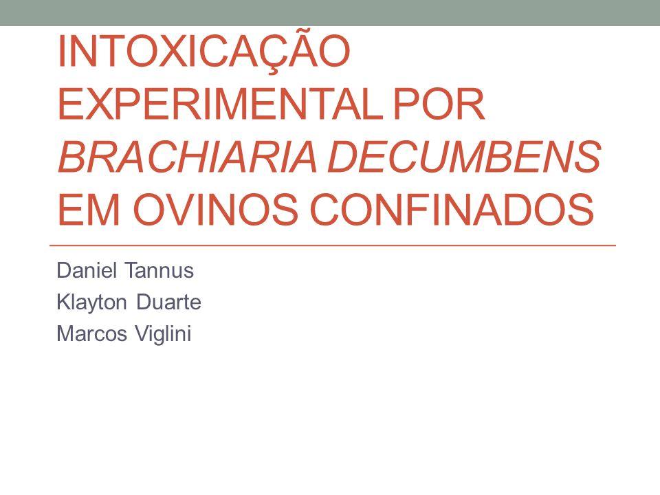 INTOXICAÇÃO EXPERIMENTAL POR BRACHIARIA DECUMBENS EM OVINOS CONFINADOS Daniel Tannus Klayton Duarte Marcos Viglini