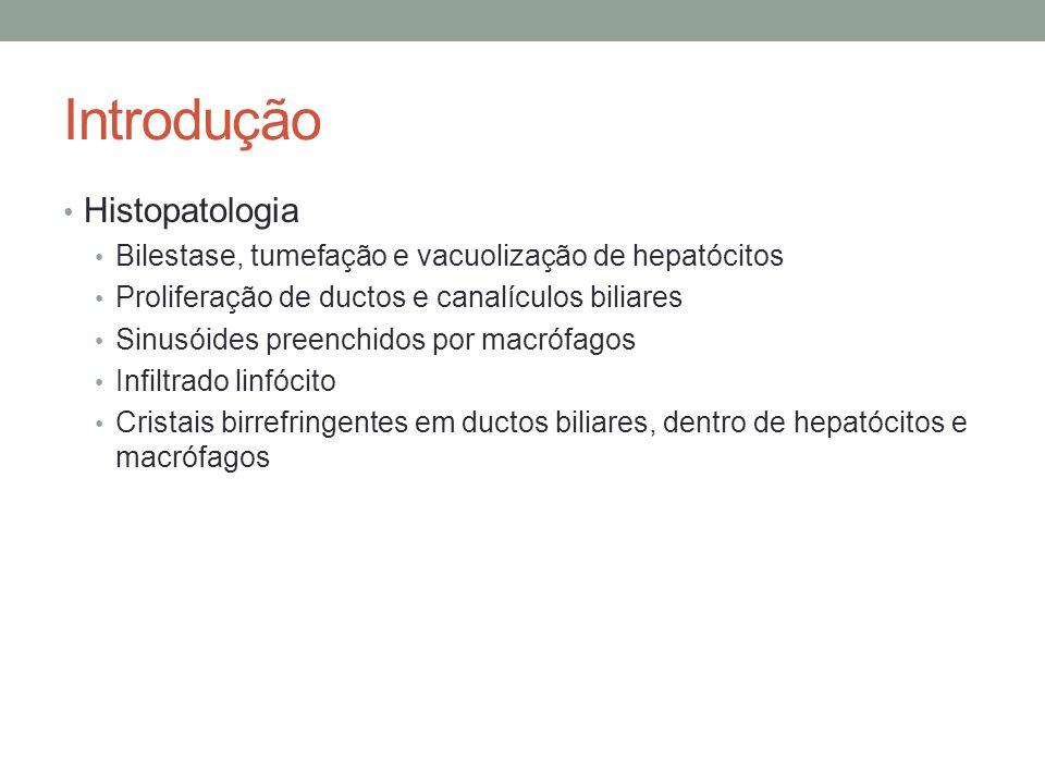 Introdução Histopatologia Bilestase, tumefação e vacuolização de hepatócitos Proliferação de ductos e canalículos biliares Sinusóides preenchidos por