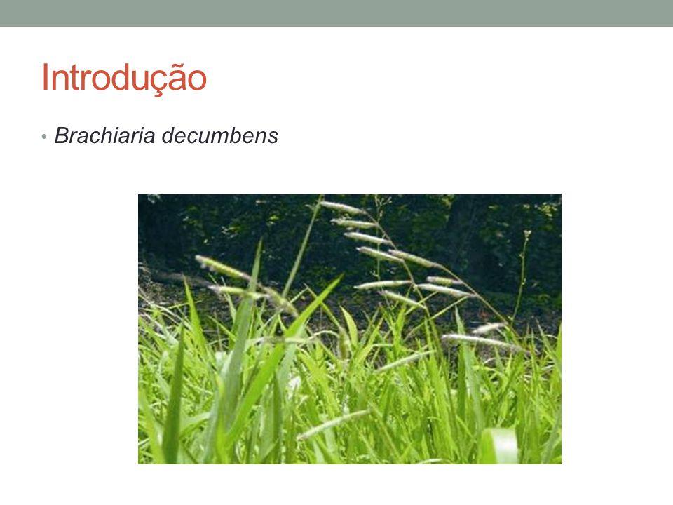 Introdução Forrageira amplamente usada como fonte alimentar para ruminantes no Brasil Boa adaptação Produção em massa em condições tropicais Associada à ocorrência de surtos de fotossensibilização nos animais