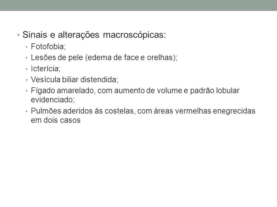Sinais e alterações macroscópicas: Fotofobia; Lesões de pele (edema de face e orelhas); Icterícia; Vesícula biliar distendida; Fígado amarelado, com a