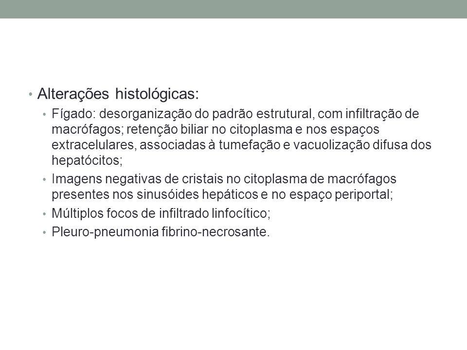 Alterações histológicas: Fígado: desorganização do padrão estrutural, com infiltração de macrófagos; retenção biliar no citoplasma e nos espaços extra