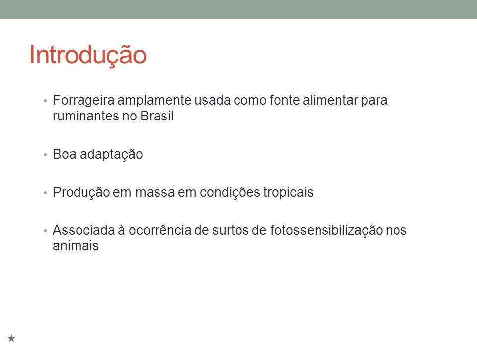 Introdução Forrageira amplamente usada como fonte alimentar para ruminantes no Brasil Boa adaptação Produção em massa em condições tropicais Associada