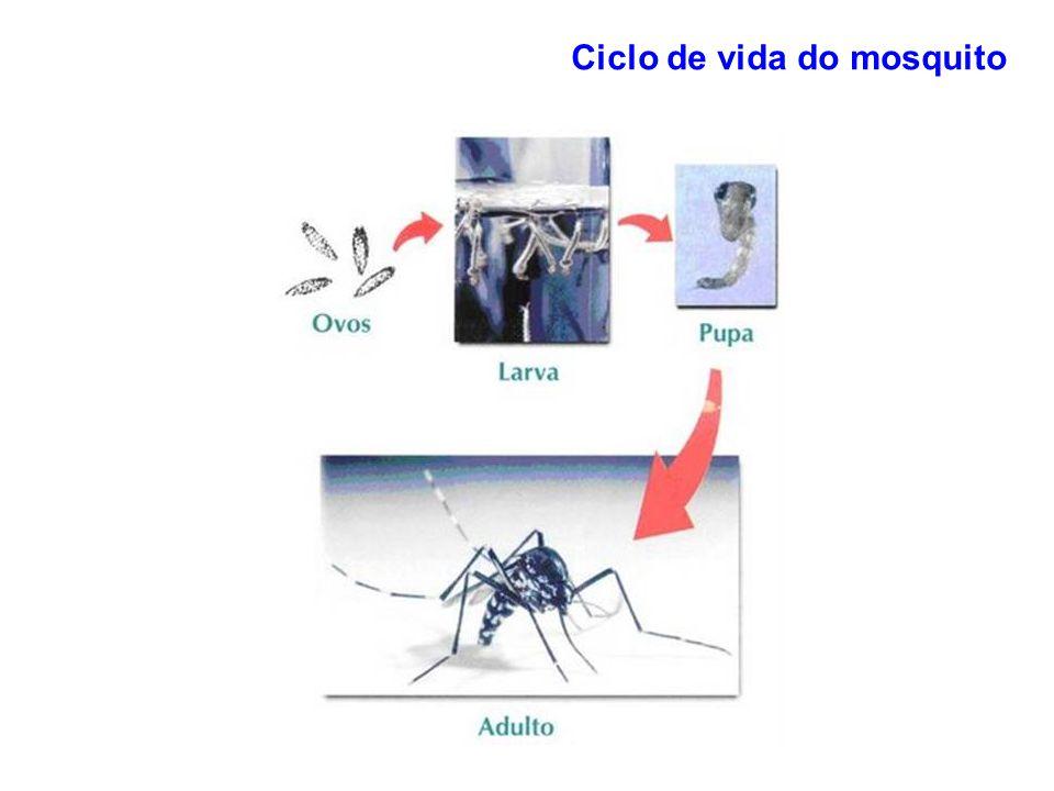Ciclo de vida do mosquito