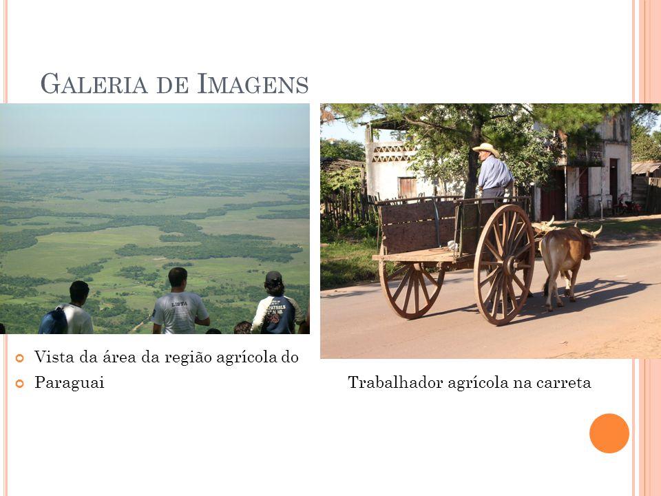 G ALERIA DE I MAGENS Vista da área da região agrícola do Paraguai Trabalhador agrícola na carreta