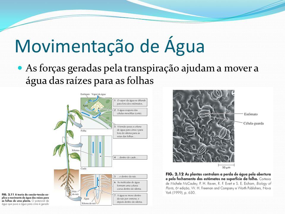 Movimentação de Água As forças geradas pela transpiração ajudam a mover a água das raízes para as folhas