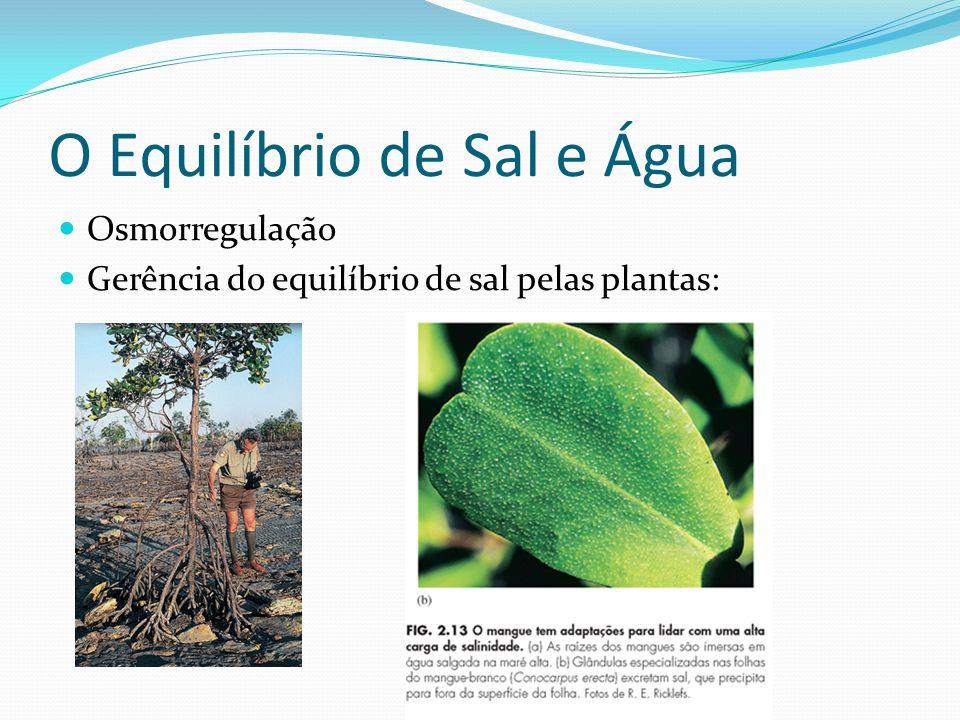 O Equilíbrio de Sal e Água Osmorregulação Gerência do equilíbrio de sal pelas plantas: