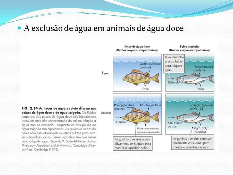 A exclusão de água em animais de água doce