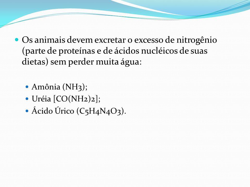 Os animais devem excretar o excesso de nitrogênio (parte de proteínas e de ácidos nucléicos de suas dietas) sem perder muita água: Amônia (NH3); Uréia