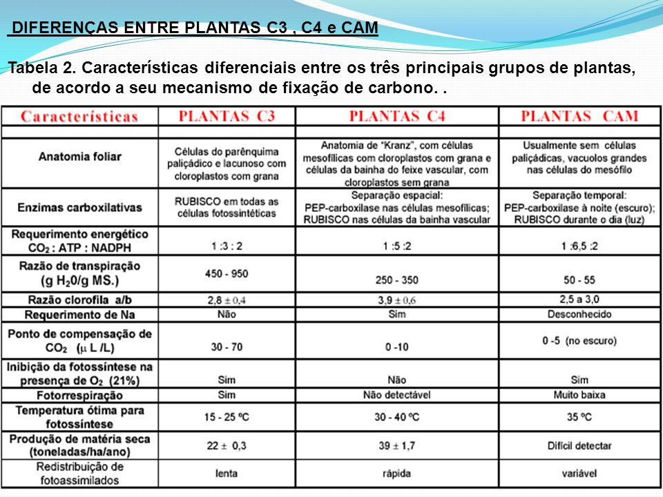 DIFERENÇAS ENTRE PLANTAS C3, C4 e CAM Tabela 2. Características diferenciais entre os três principais grupos de plantas, de acordo a seu mecanismo de