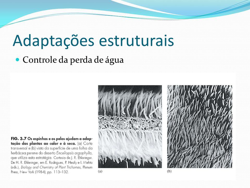 Adaptações estruturais Controle da perda de água