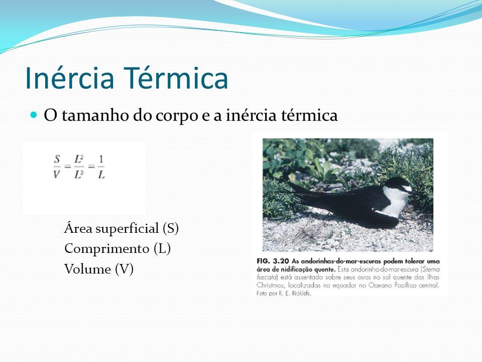 Inércia Térmica O tamanho do corpo e a inércia térmica Área superficial (S) Comprimento (L) Volume (V)