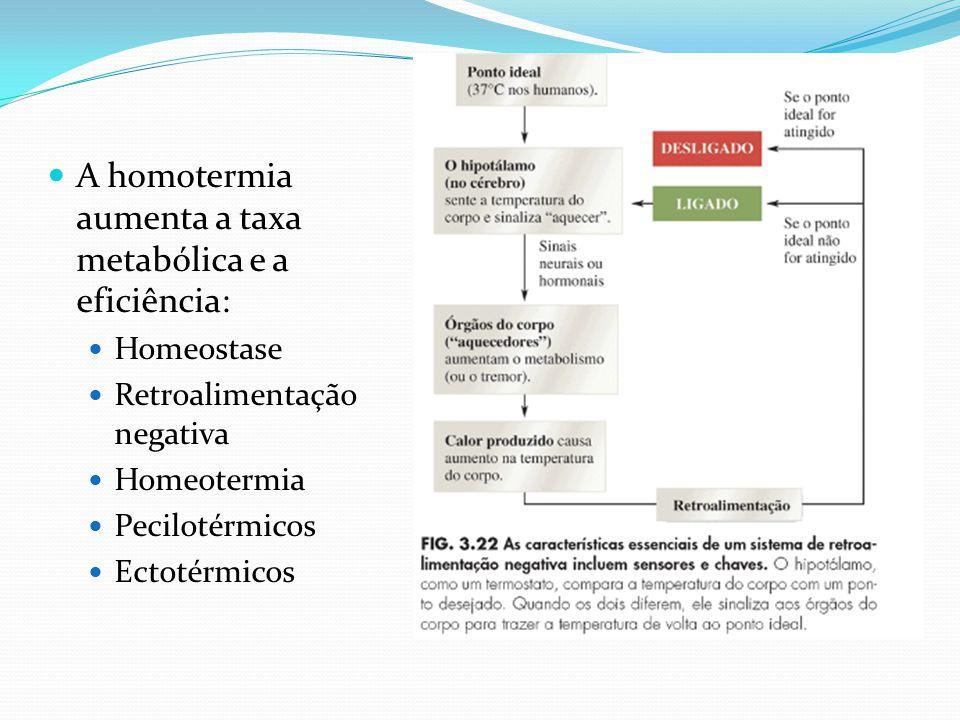 A homotermia aumenta a taxa metabólica e a eficiência: Homeostase Retroalimentação negativa Homeotermia Pecilotérmicos Ectotérmicos
