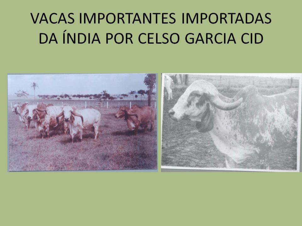 VACAS IMPORTANTES IMPORTADAS DA ÍNDIA POR CELSO GARCIA CID