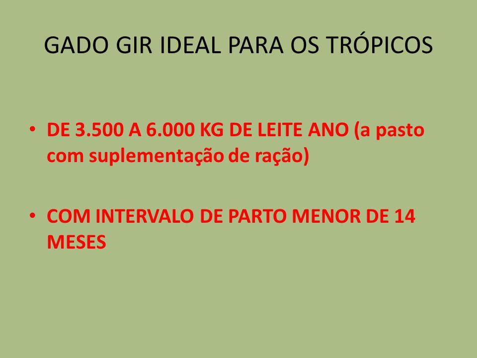 GADO GIR IDEAL PARA OS TRÓPICOS DE 3.500 A 6.000 KG DE LEITE ANO (a pasto com suplementação de ração) COM INTERVALO DE PARTO MENOR DE 14 MESES