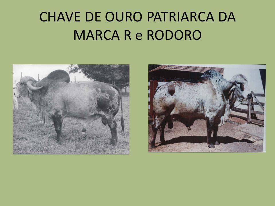 CHAVE DE OURO PATRIARCA DA MARCA R e RODORO