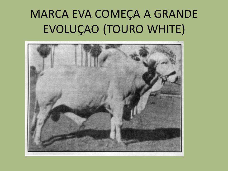 MARCA EVA COMEÇA A GRANDE EVOLUÇAO (TOURO WHITE)