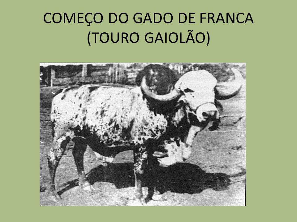 VACAS GIR DE ALTA LACTAÇAO DA ATUALIDADE