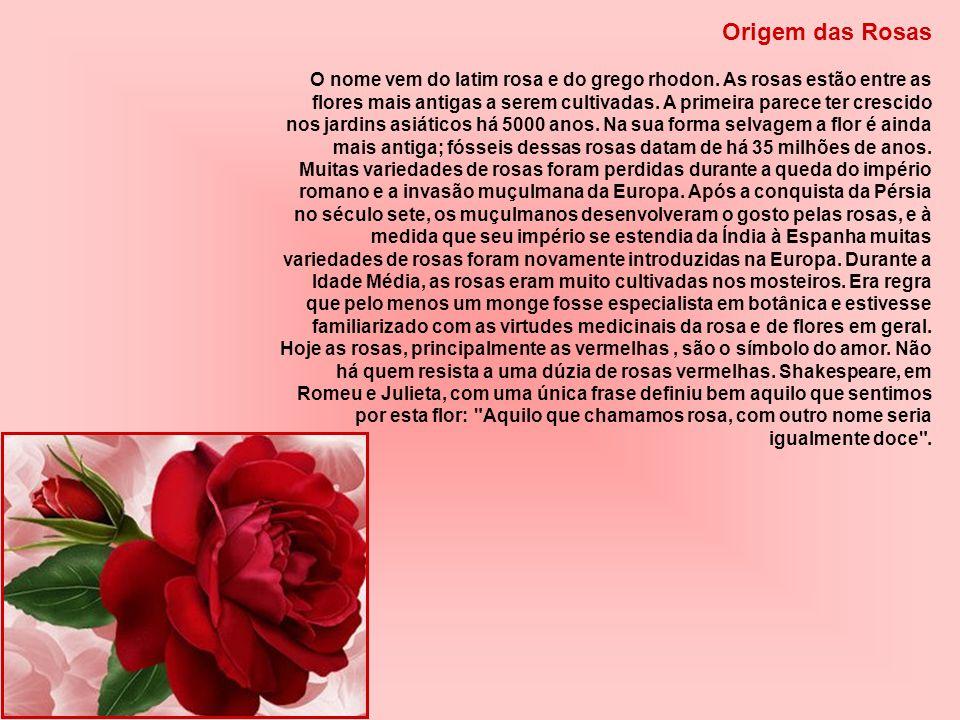 Origem das Rosas O nome vem do latim rosa e do grego rhodon.