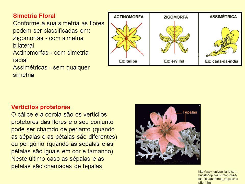 Simetria Floral Conforme a sua simetria as flores podem ser classificadas em: Zigomorfas - com simetria bilateral Actinomorfas - com simetria radial Assimétricas - sem qualquer simetria Verticilos protetores O cálice e a corola são os verticilos protetores das flores e o seu conjunto pode ser chamdo de perianto (quando as sépalas e as pétalas são diferentes) ou perigônio (quando as sépalas e as pétalas são iguais em cor e tamanho).