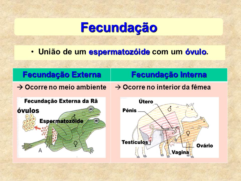 espermatozóideóvuloUnião de um espermatozóide com um óvulo. Fecundação Fecundação Externa Fecundação Interna Ocorre no meio ambiente Ocorre no interio