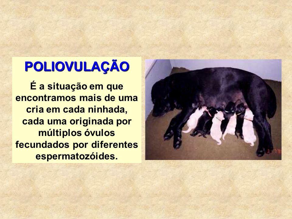 POLIOVULAÇÃO É a situação em que encontramos mais de uma cria em cada ninhada, cada uma originada por múltiplos óvulos fecundados por diferentes esper