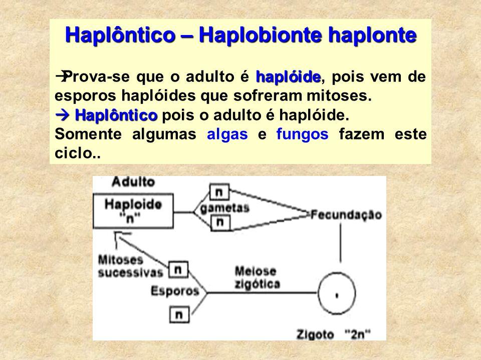 Haplôntico – Haplobionte haplonte haplóide Prova-se que o adulto é haplóide, pois vem de esporos haplóides que sofreram mitoses. Haplôntico Haplôntico