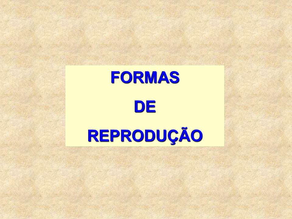 1º DIA MENST.+ 14 + 5 = período fértil Exemplos:5 + 14 + 5 = 14 a 24 22 + 14 + 5 = 31 a 41(- 30) = 01 a 11(do mês seguinte)