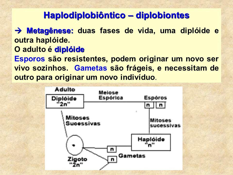 Haplodiplobiôntico – diplobiontes Metagênese: Metagênese: duas fases de vida, uma diplóide e outra haplóide. diplóide O adulto é diplóide Esporos são