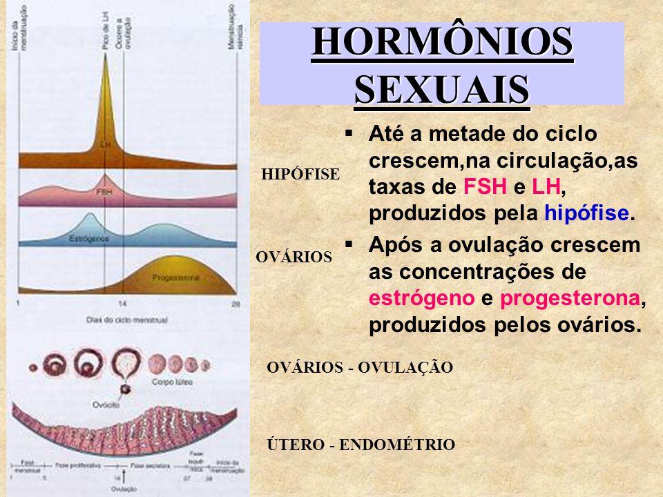 HORMÔNIOS SEXUAIS Até a metade do ciclo crescem,na circulação,as taxas de FSH e LH, produzidos pela hipófise. Após a ovulação crescem as concentrações