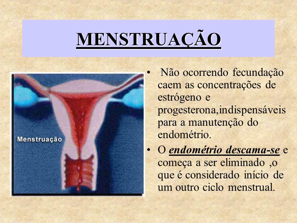 MENSTRUAÇÃO Não ocorrendo fecundação caem as concentrações de estrógeno e progesterona,indispensáveis para a manutenção do endométrio. O endométrio de