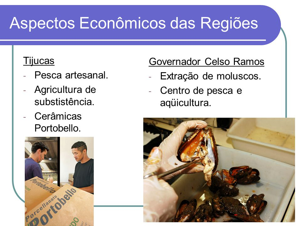 Aspectos Econômicos das Regiões Tijucas - Pesca artesanal. - Agricultura de substistência. - Cerâmicas Portobello. Governador Celso Ramos - Extração d