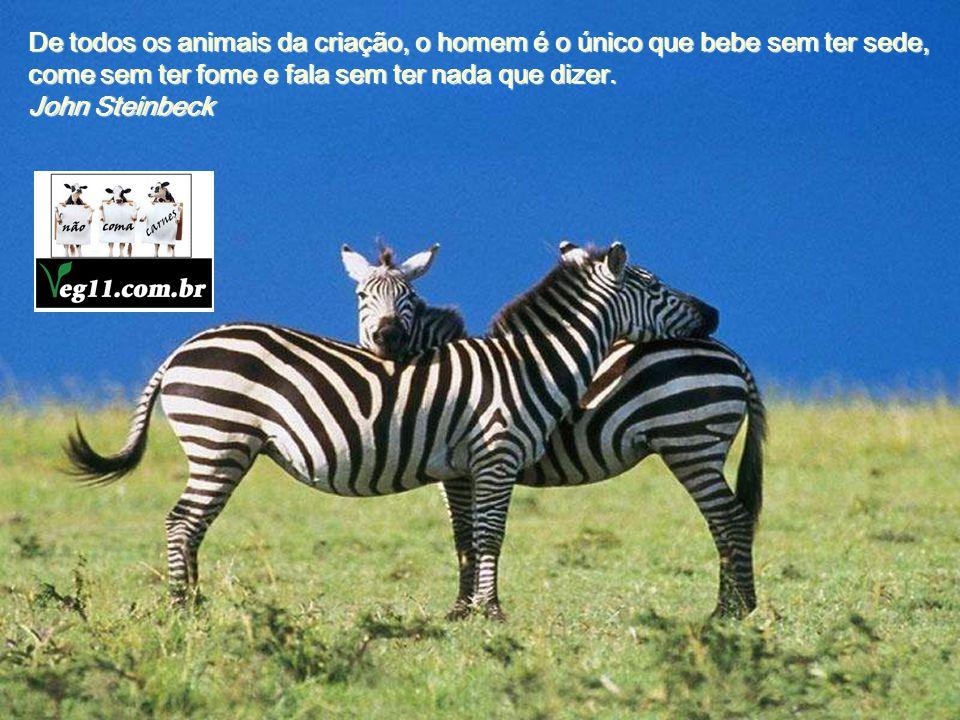Os animais são bons amigos, não fazem perguntas e não criticam. George Elliot George Elliot