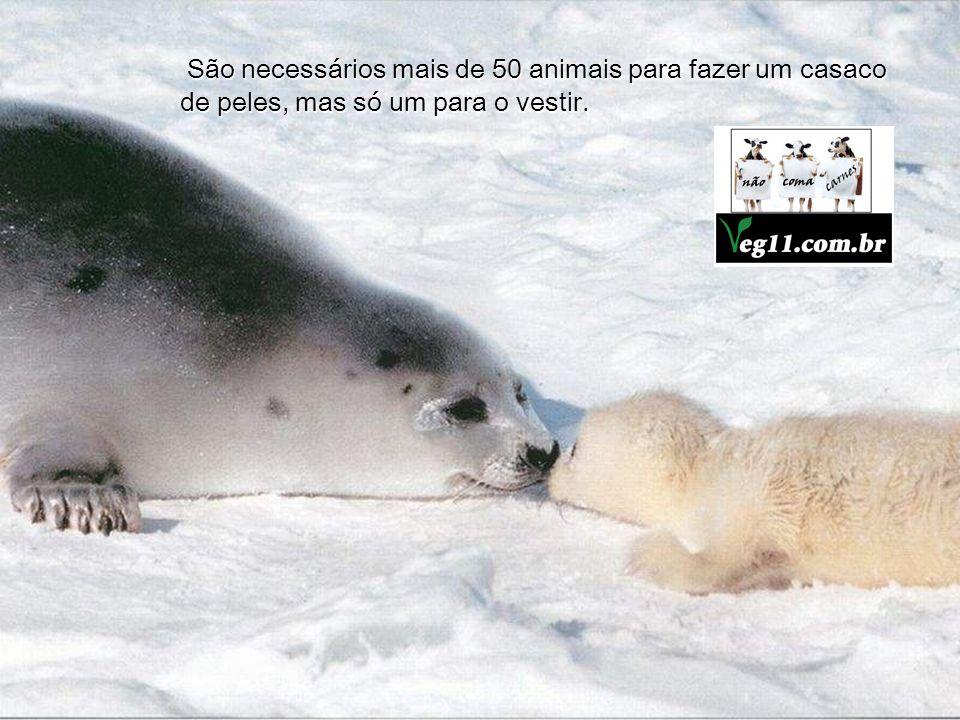 O verdadeiro rei dos animais é o homem, pois a sua brutalidade supera a de todos. Leonardo Da Vinci Leonardo Da Vinci