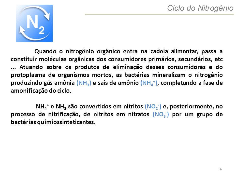 16 Ciclo do Nitrogênio Quando o nitrogênio orgânico entra na cadeia alimentar, passa a constituir moléculas orgânicas dos consumidores primários, secu