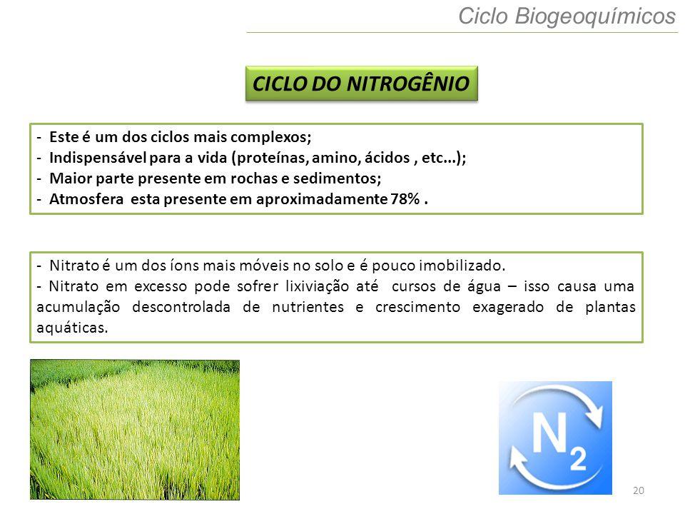 20 Ciclo Biogeoquímicos CICLO DO NITROGÊNIO - Este é um dos ciclos mais complexos; - Indispensável para a vida (proteínas, amino, ácidos, etc...); - M