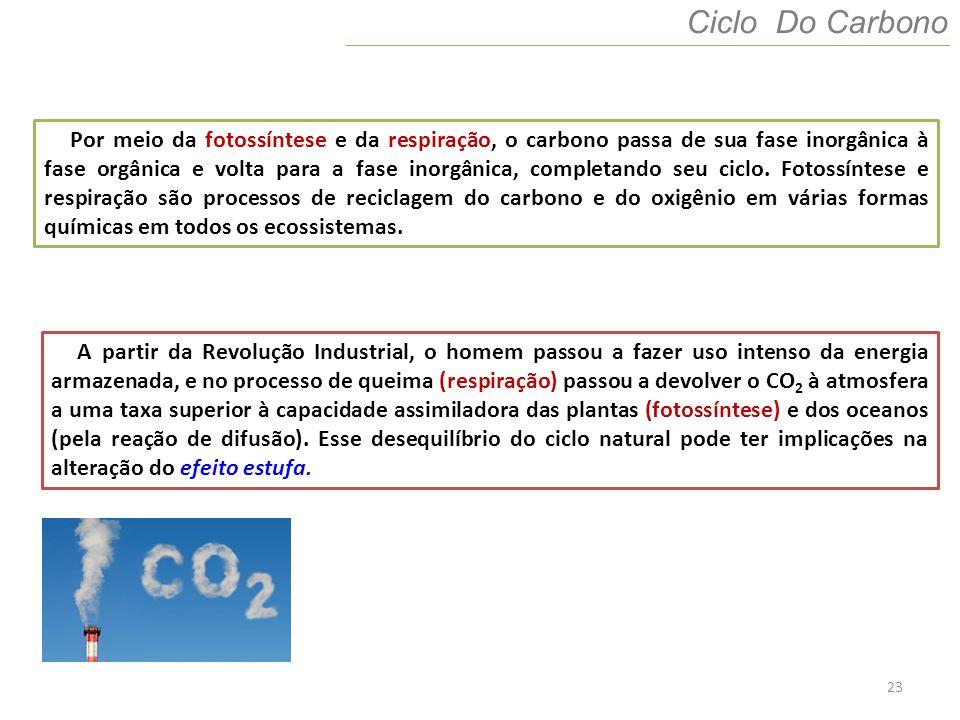 23 Ciclo Do Carbono Por meio da fotossíntese e da respiração, o carbono passa de sua fase inorgânica à fase orgânica e volta para a fase inorgânica, c
