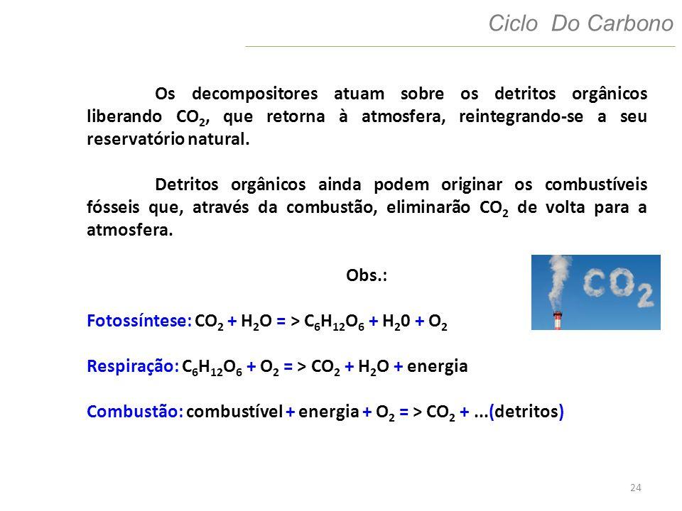 24 Ciclo Do Carbono Os decompositores atuam sobre os detritos orgânicos liberando CO 2, que retorna à atmosfera, reintegrando-se a seu reservatório na