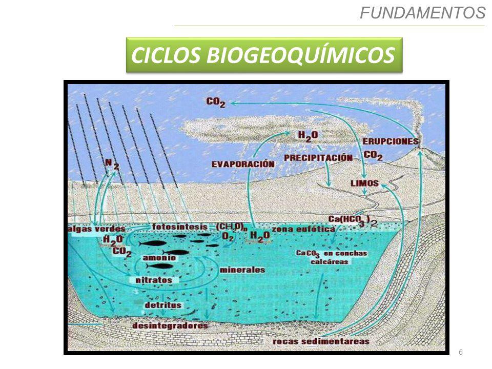 7 Ciclo Biogeoquímicos CICLO DO FÓSFORO Fósforo é um elemento importante devido: - É um nutriente essencial e limitante; - Principal uso como fertilizante; - Escoamento de água contendo fosfato pode causar eutrofização.