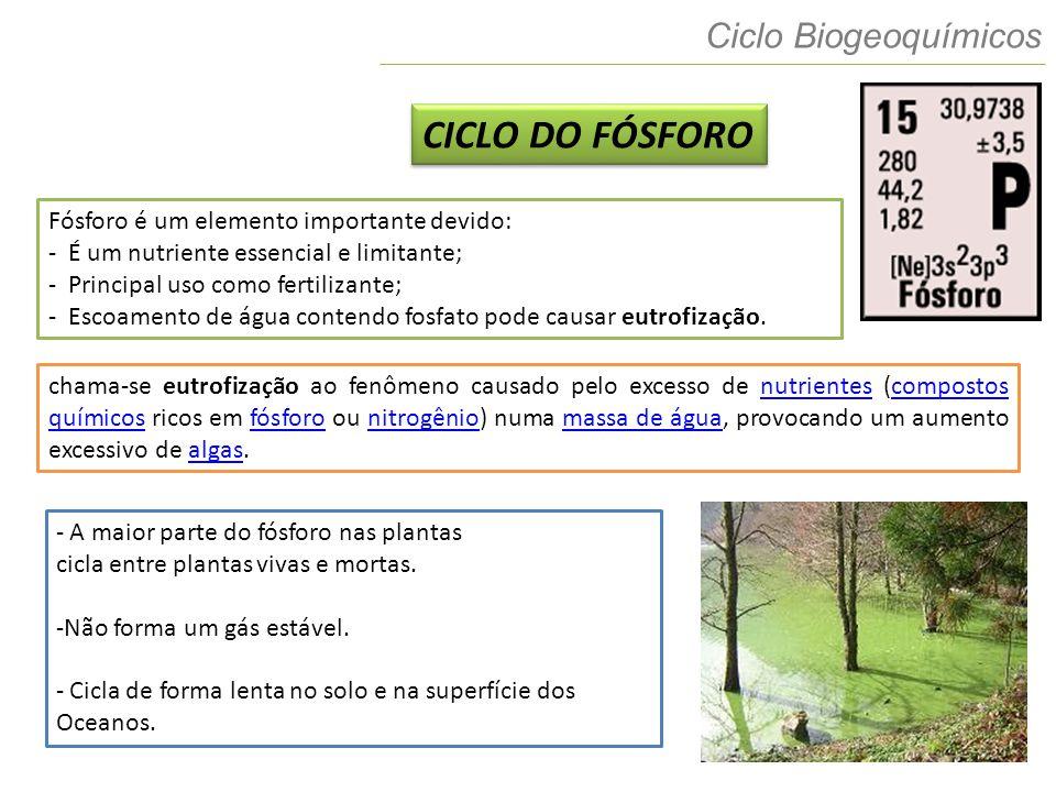 7 Ciclo Biogeoquímicos CICLO DO FÓSFORO Fósforo é um elemento importante devido: - É um nutriente essencial e limitante; - Principal uso como fertiliz
