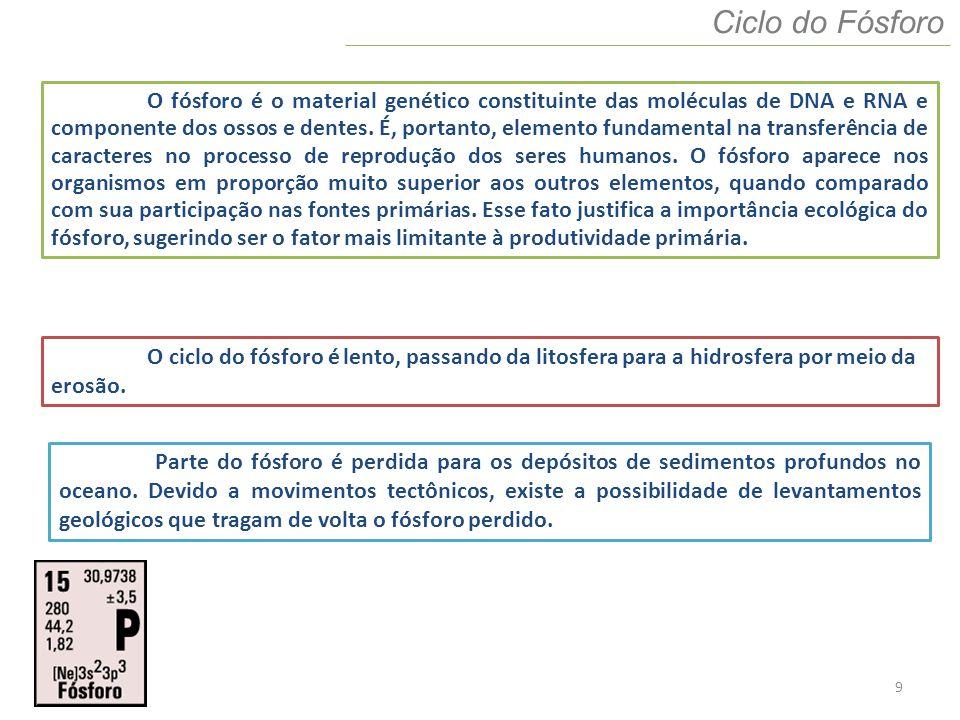 10 Ciclo Biogeoquímicos CICLO DO FÓSFORO