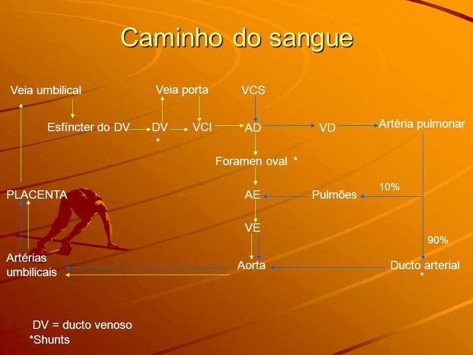 Caminho do sangue Veia umbilical Esfíncter do DVDV Veia porta VCI AD Foramen oval AE VE Aorta VCS Artéria pulmonar VD DV = ducto venoso Pulmões Ducto