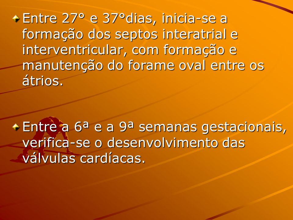 Entre 27° e 37°dias, inicia-se a formação dos septos interatrial e interventricular, com formação e manutenção do forame oval entre os átrios. Entre a