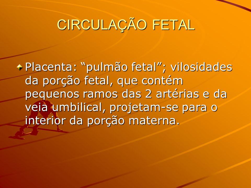 CIRCULAÇÃO FETAL Placenta: pulmão fetal; vilosidades da porção fetal, que contém pequenos ramos das 2 artérias e da veia umbilical, projetam-se para o