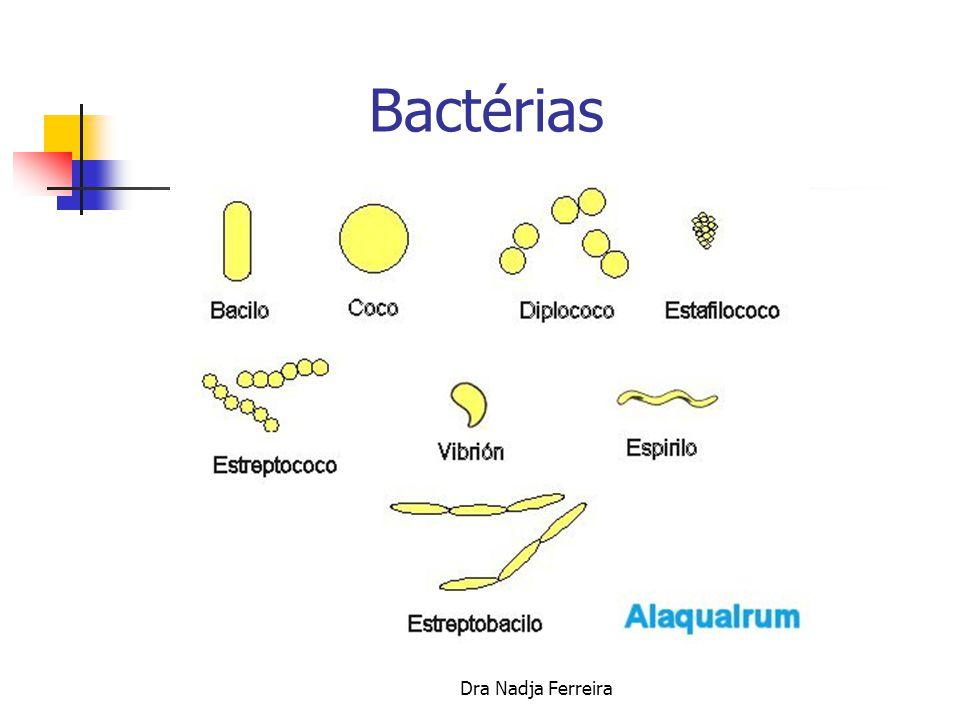 Dra Nadja Ferreira VÍRUS- SIDA -HEPATITE AIDS/SIDA Doença infecciosa causada pelo vírus da imunodeficiência humana, que leva a uma perda da imunidade progressiva resultando em infecções graves, tumores malignos e manifestações causadas pelo próprio vírus.