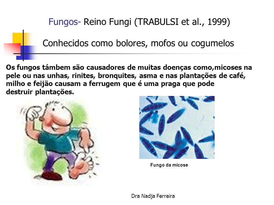 Dra Nadja Ferreira Fungos- Reino Fungi (TRABULSI et al., 1999) Conhecidos como bolores, mofos ou cogumelos Penicillium notatum = produção da Penicilina Queijo maturado por fungos Champignom (Agaricus).
